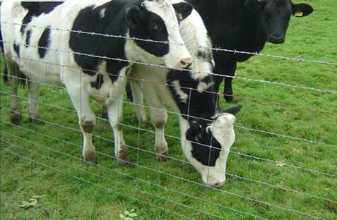 Field Fences for Breeding of Cattles